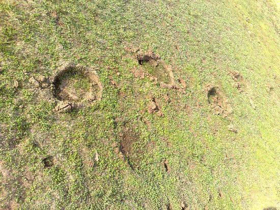 Thekkady, Inde : Elefant gibt's dort auch, aber man sieht meist nur ihre Spuren - nicht die Tiere