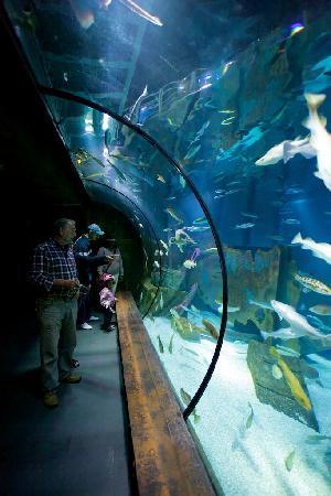 Bristol Aquarium : Large UK waters display