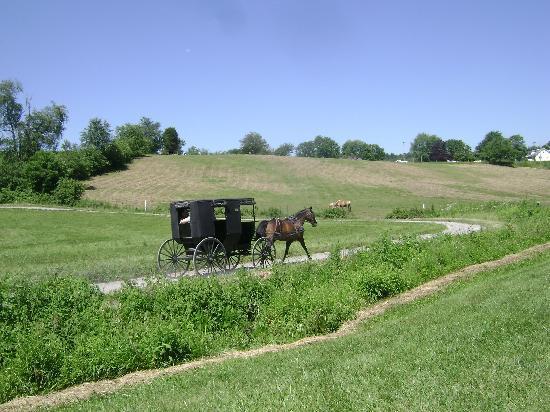 The Cornerstone: Amish buggy