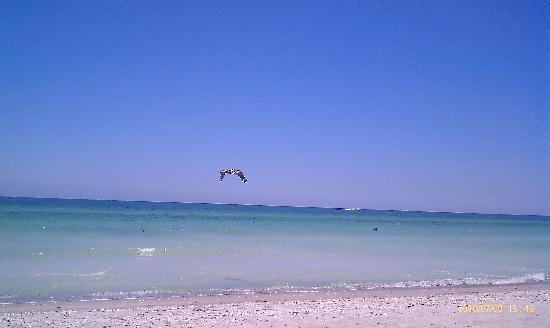 Longboat Key, FL: Our paradise.