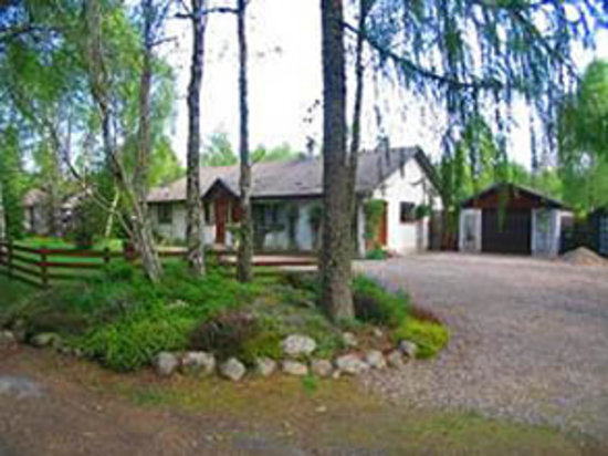 An Darach Bed & Breakfast : Here's the view from within the woods, just across the lane