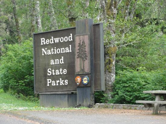 Inn of the Lost Coast: red wood park