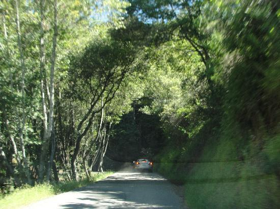 Inn of the Lost Coast: road to lost cove