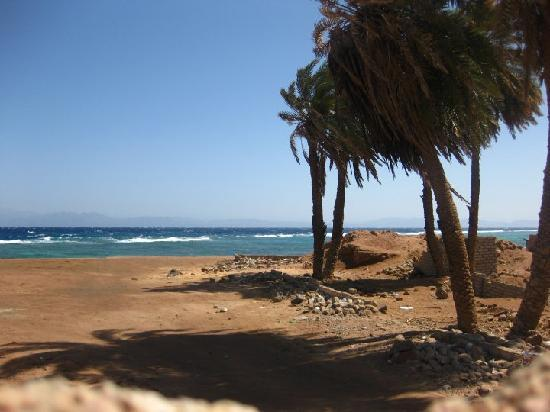 Dahab, Egypt: palm trees blowing in the wind