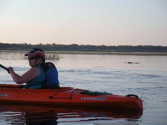 Adventure Kayak Outfitters: Me with an alligator at a close distance