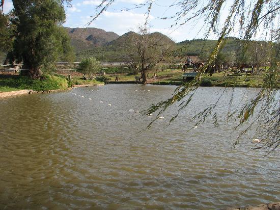Oudtshoorn, แอฟริกาใต้: Dam
