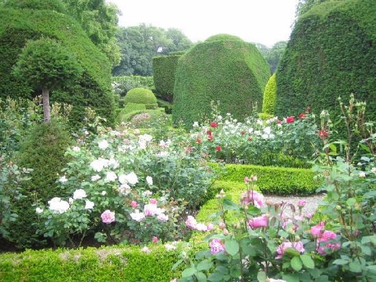Kendal, UK: 野趣溢れる薔薇