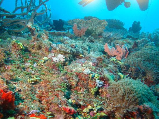 Sakatia Lodge : Crocodile fish while diving
