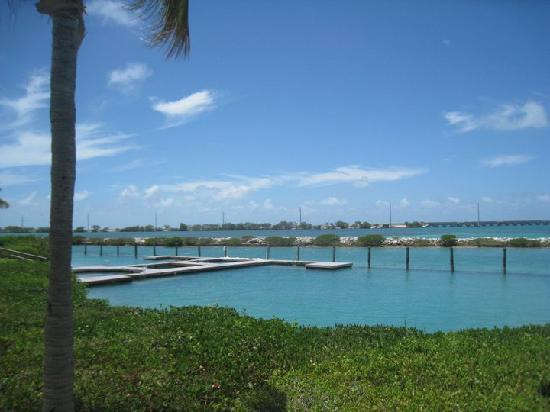 Hawks Cay Resort: Dolphin Encounter!