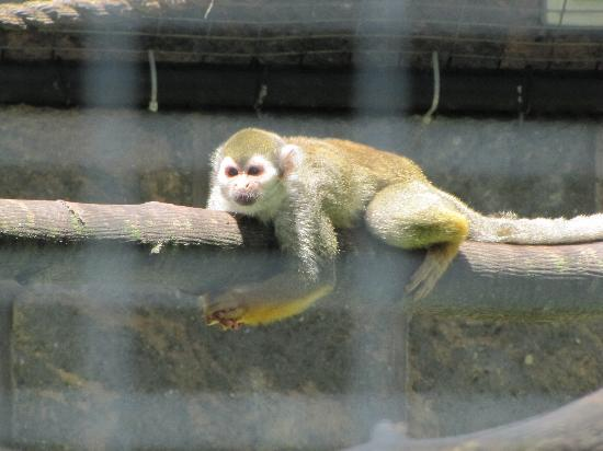 ‪‪Peterborough‬, كندا: Squirrel Monkey‬