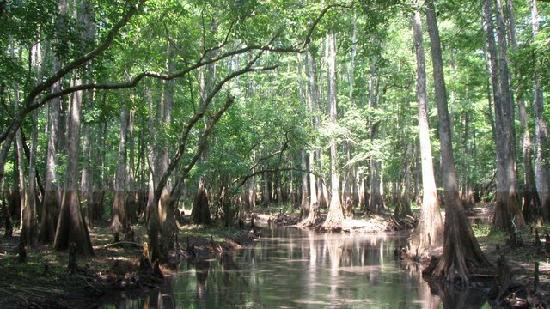 A-Awesome Airboat Rides: Look at those trees