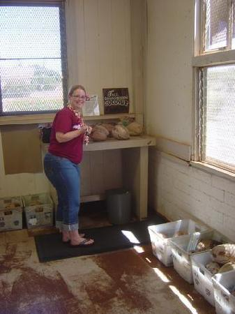 Post-A-Nut, Hoolehua Post Office : Inside with the coconut bins.