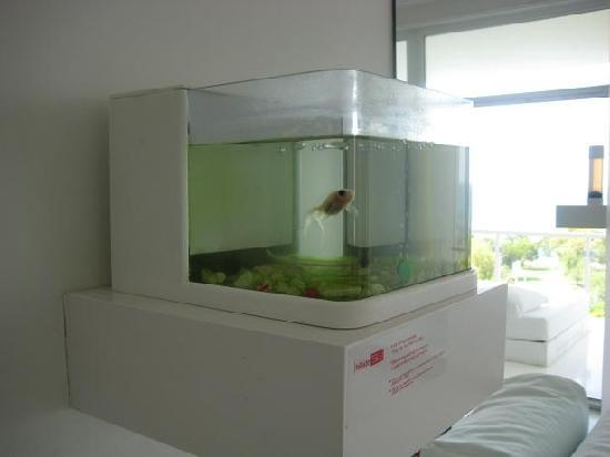 Hotel Su: Gold fish in room