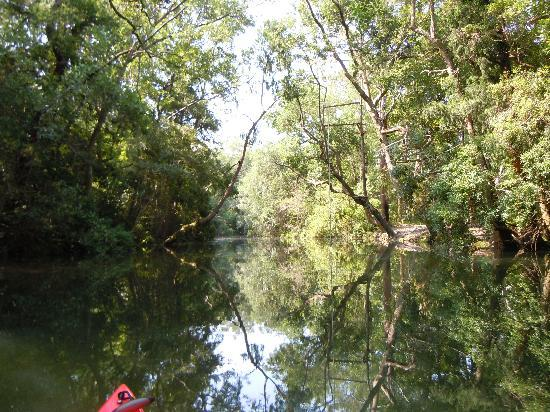 BeachnRiver Canoe and Kayak Rentals : The scenery is beautiful!!