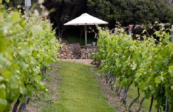 Owhanake Bay Estate: Our Vineyard