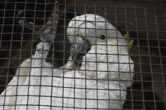 Billabong Zoo: Koala & Wildlife Park: Cockatoo eager for attention