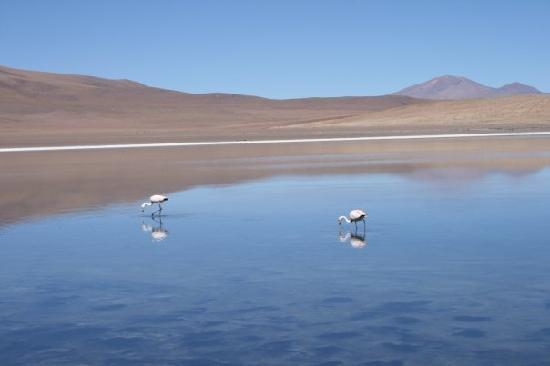 Bolivia: Flamingo's