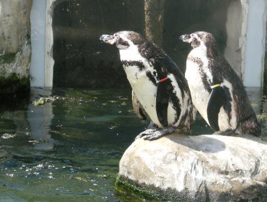 Γουέιμουθ, UK: Penguins at Sealife Weymouth