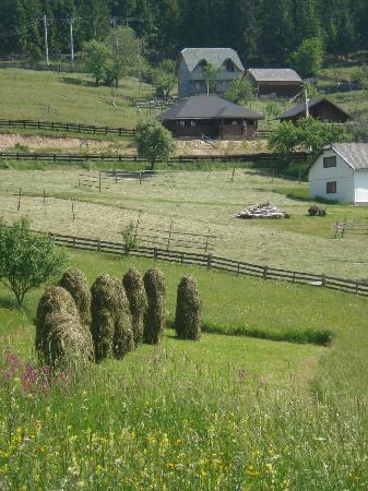 Vatra Moldovitei, Rumania: Haystacks outside of Moldovita Monastery