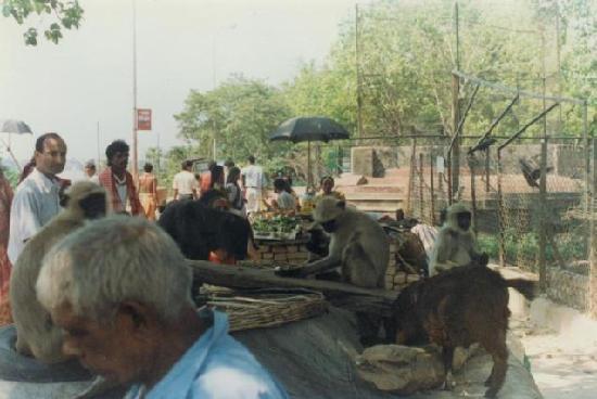 Dakshineswar Kali Temple: trading