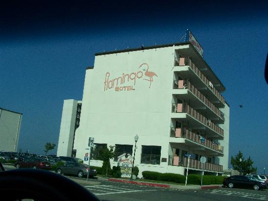 Flamingo Motel: DRIVING UP TO FLAMINGO