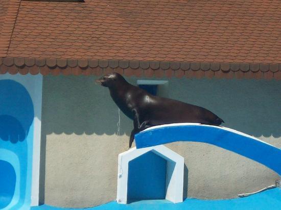 Zoo de la Palmyre : 07-2010