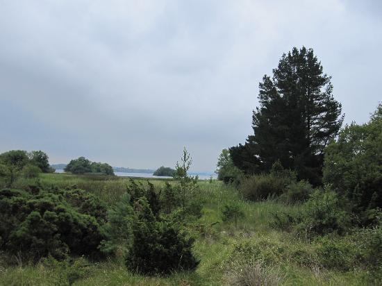 Portumna Forest Park: View Platform