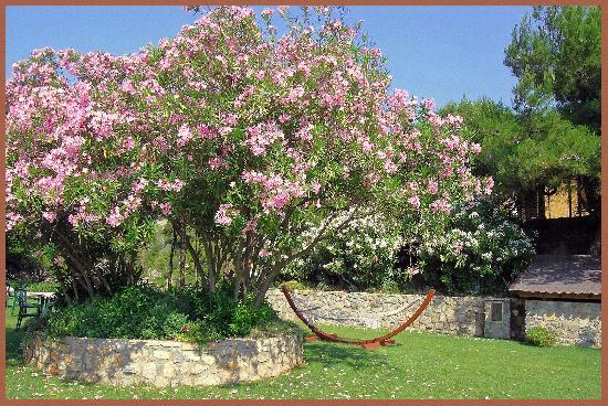 Talamone, Italien: Rododendron in the garden