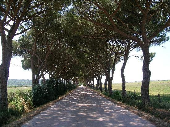 Hotel Capo d'Uomo: Maremma road to Marina da Alberese