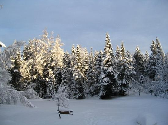 Carlson's Lodge: back yard in winter!