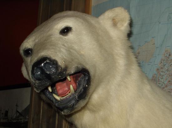 Mary-Ann's Polarrigg: stuffed polar bear head on the wall