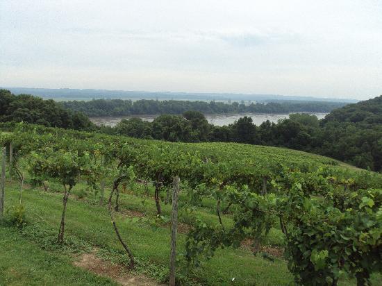 The Inn at Hermannhof: View of Vineyard from Oak Glenn