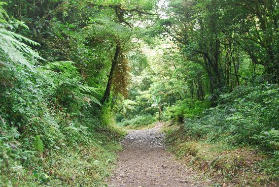 Hotel Jardines de Monteverde: Hiking in Monteverde