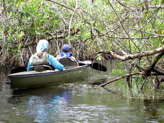 "Everglades City, FL: entering the mangrove ""tunnel"""