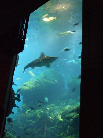Water Steps Picture Of Tennessee Aquarium Chattanooga