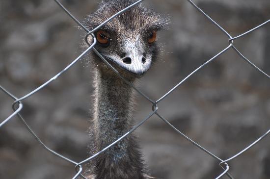 JC Residency: Mr.Emu
