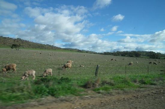 Barossa Valley, أستراليا: Barossa Valley, South Australia, Australia