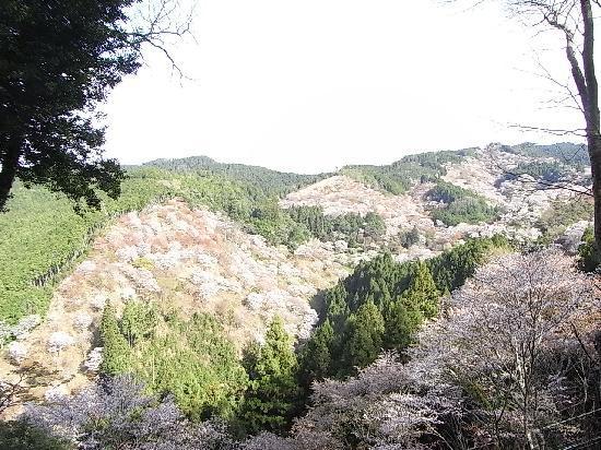 Yoshino-cho, Japón: 吉野山①