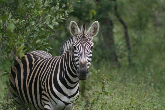Garonga Safari Camp: Just one of the amazing photo opportunities we had