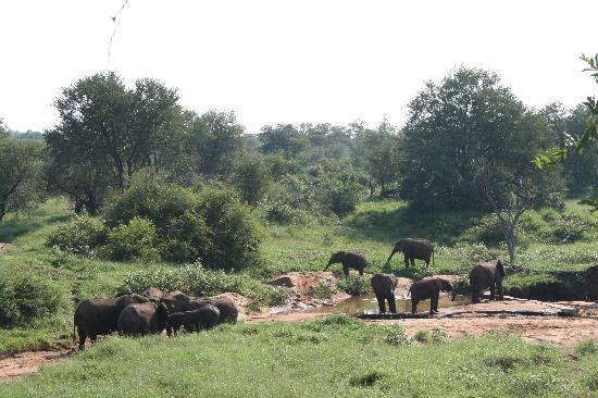 Garonga Safari Camp: View from our tent when elephants appeared