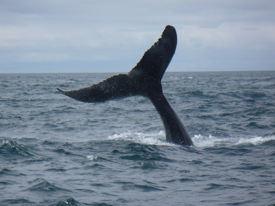 Brier Island, Canadá: Whale of a time!