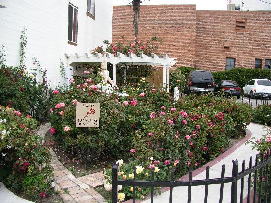 Pismo Beach Hotel: Rose Garden
