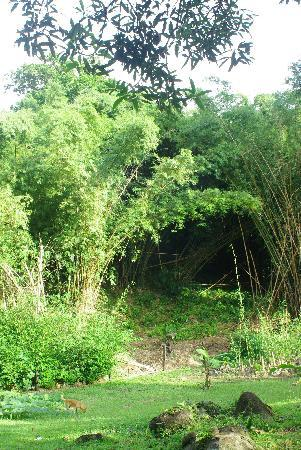 Bambu Guest House 이미지