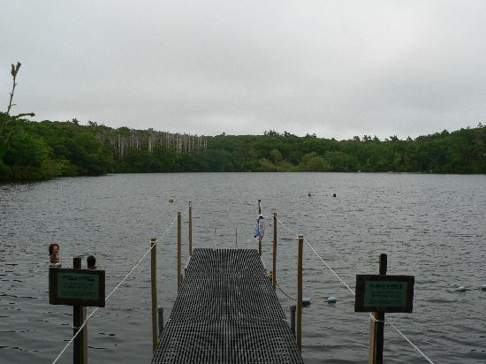 Lambert's Cove Inn: Freshwater pond close to the Inn
