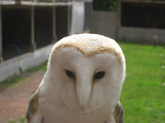 The Falconry Centre: What you looking at?
