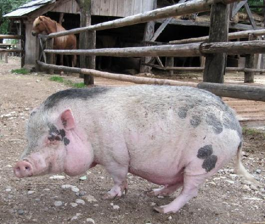 Rustic-House 13: You have a horses ranch next door, and a cute pig :)