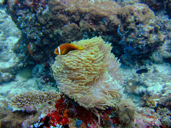 Angaga Island: Nemo on the house reef
