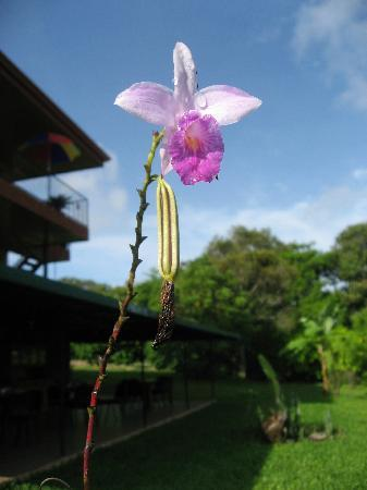 Vista Linda Montaña: Orchids on the grounds