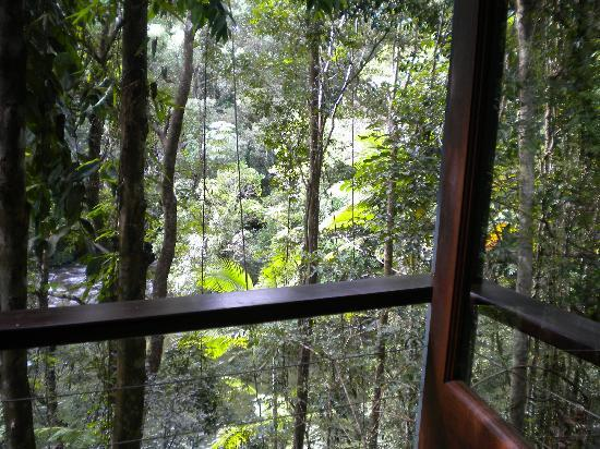 Silky Oaks Lodge: View into the Rainforest from deck