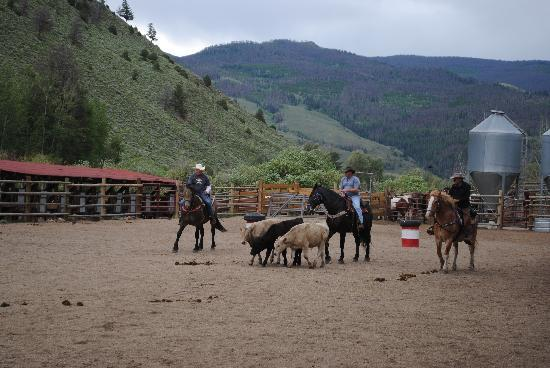 Drowsy Water Ranch: Team cattle penning - so much fun!